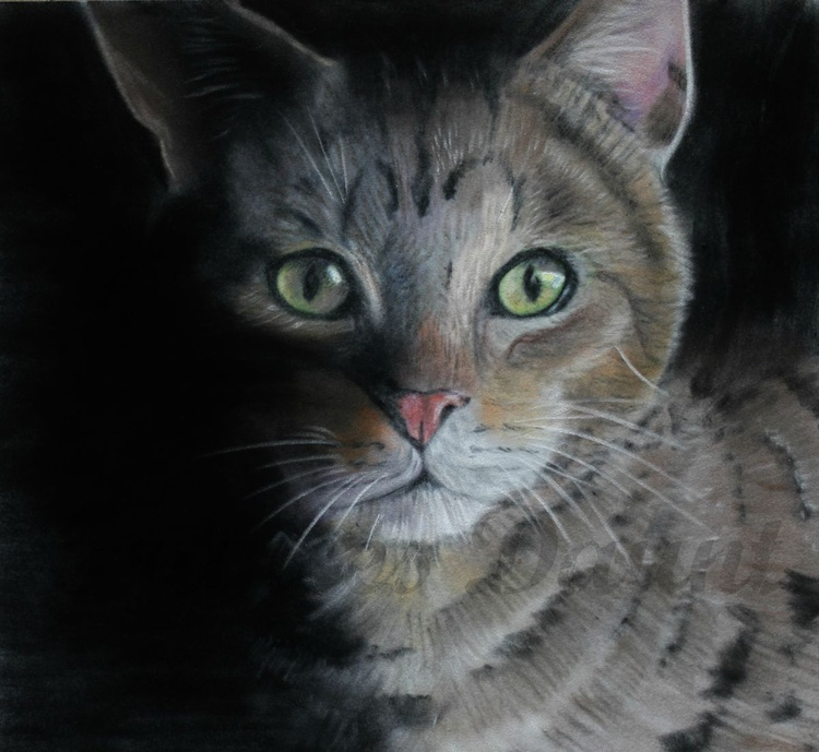 Out of the Shadows, framed pastel picture of a cat - Image 0