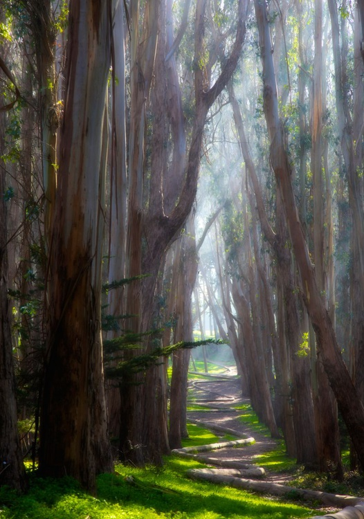The Path To You - Image 0
