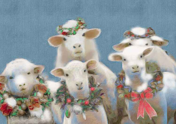 Festive Sheep -