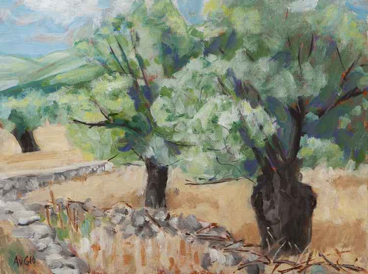 Old olive trees -