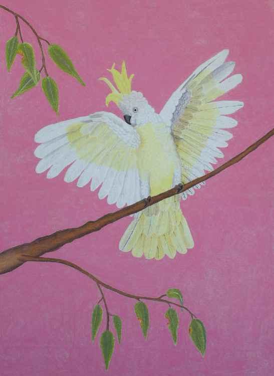 Beautiful Cockatoo -