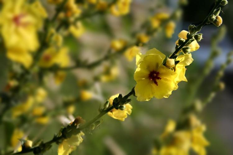 Yellow in the sun - Image 0