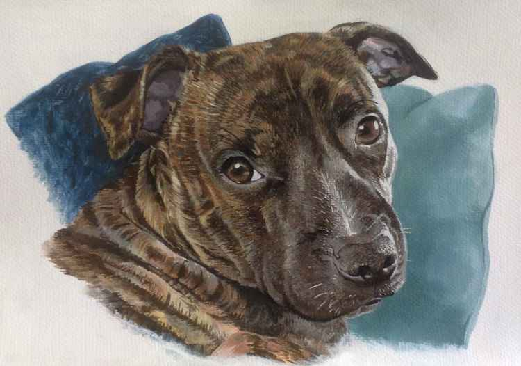 staffy cross -