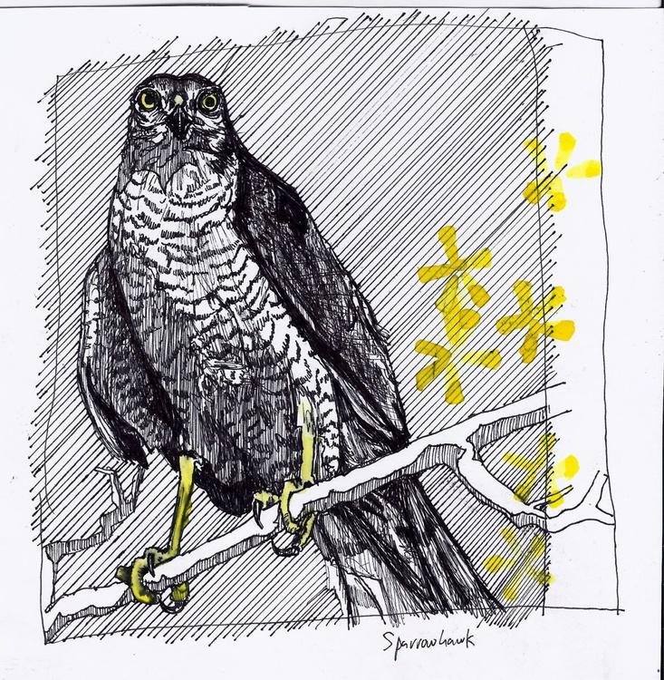 Sparrowhawk - Image 0