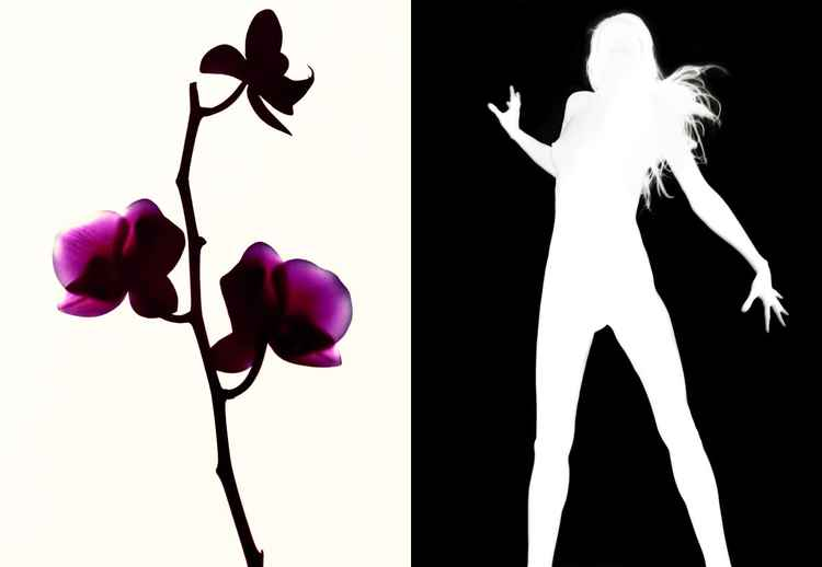 Orchid Silhouette #1