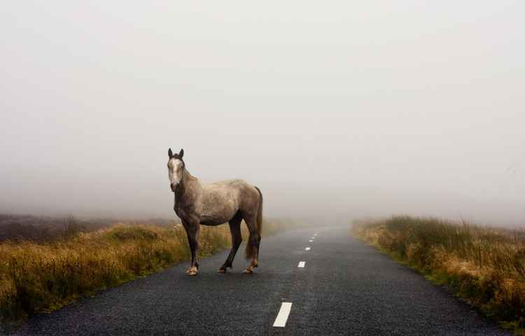 Wild Horse in Ireland