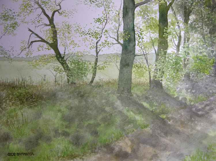 Wooded bank in late spring -