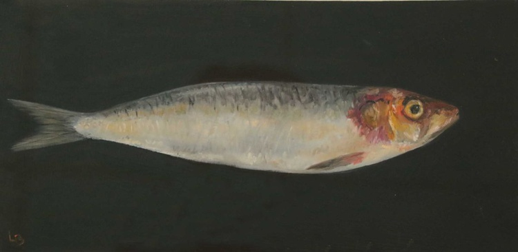 Cornish Sardine - Image 0