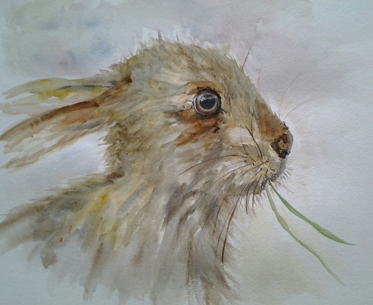 """""""HOLLY HARE"""", watercolour, 9x12inch - Image 0"""