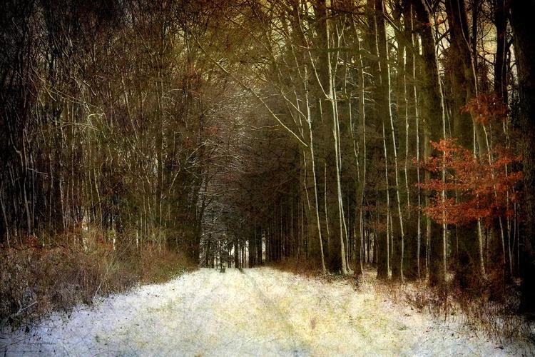 Autumn meets Winter - Image 0