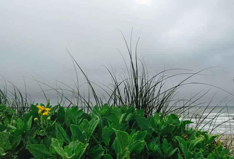 Padre Island 11