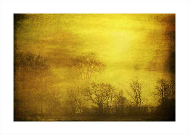 Misty Trees and Sunset -