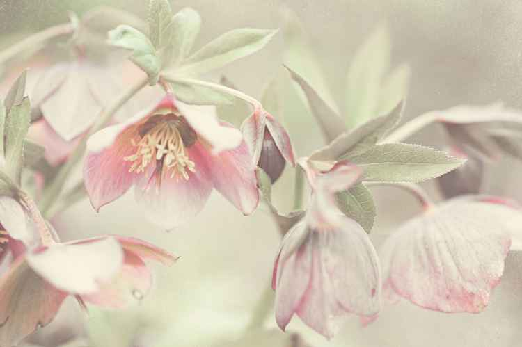 Spring Pastels (Ltd Edition of only 25 Fine Art Giclee Prints from an original photograph)