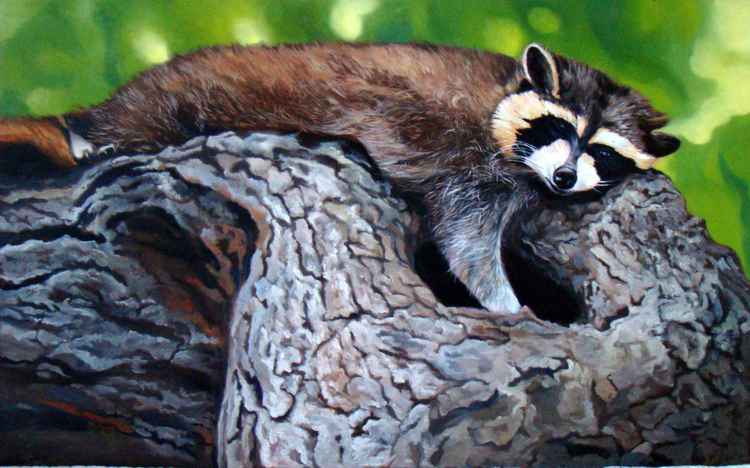 The raccoon -