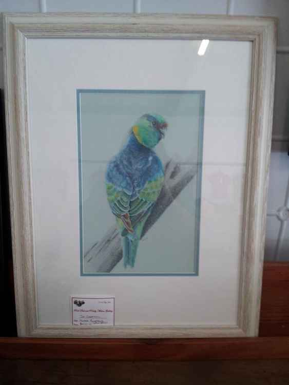 Mallee Ringneck -