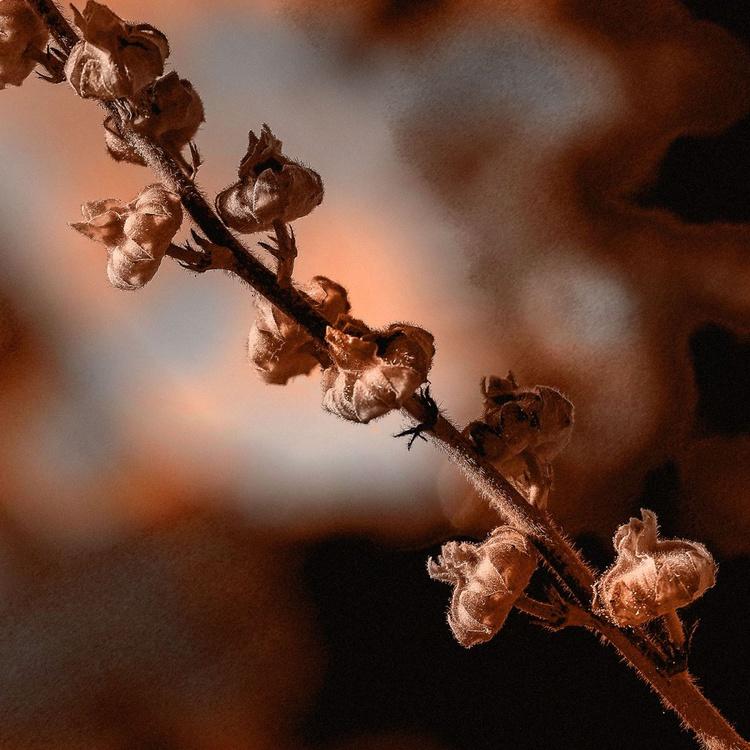 Spring Still Life - Image 0