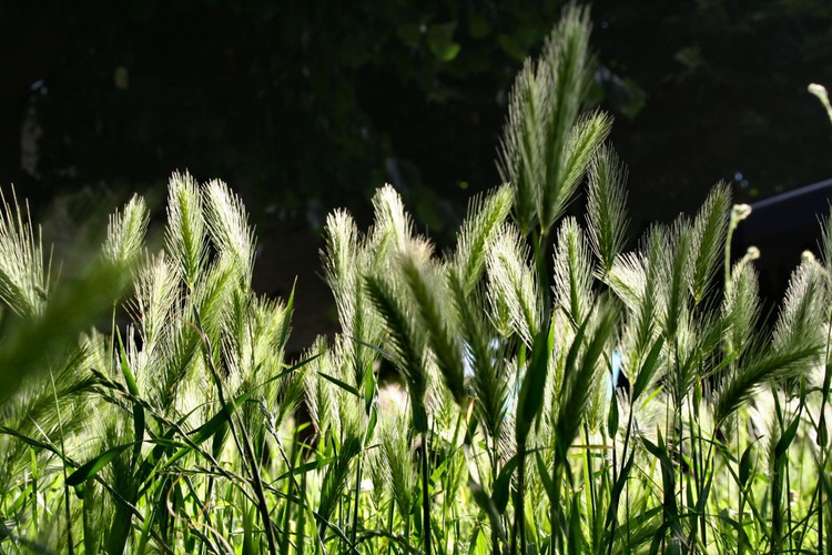 Grass in the Morning - Image 0