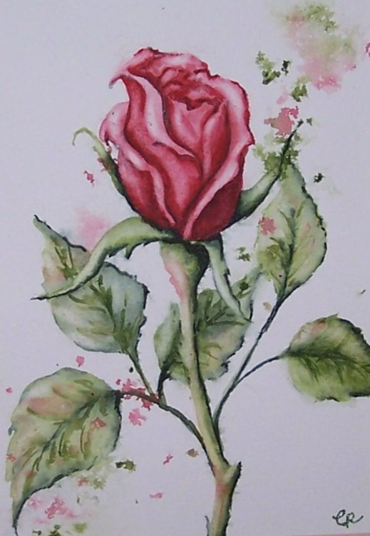 Single Rose - Image 0