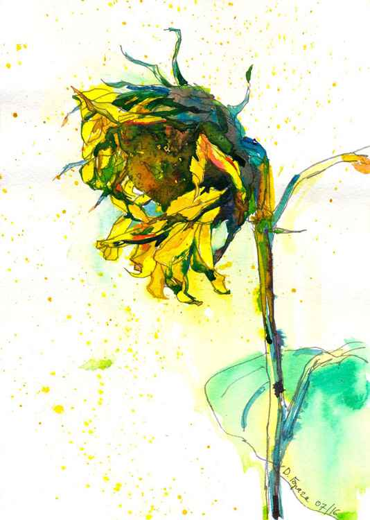 Sunflower, ink -