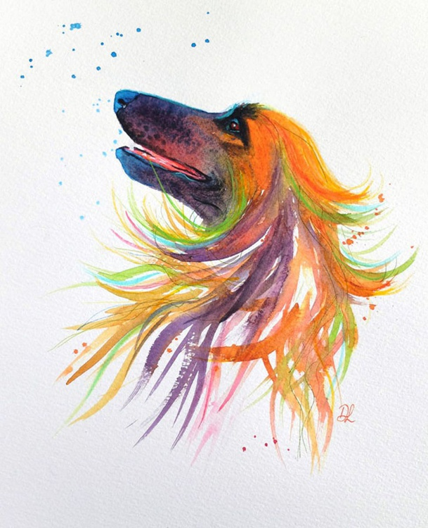 Bubbles - Afghan Hound - Image 0