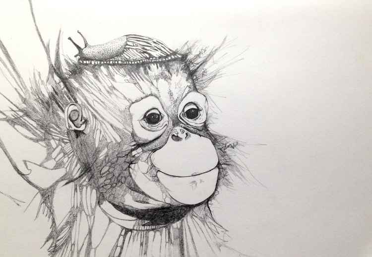 Orang-utan with a Slug Hat. -