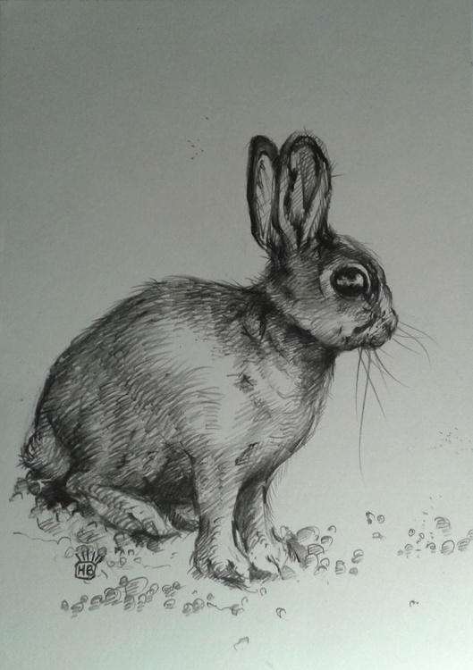 Bunny Number One. - Image 0