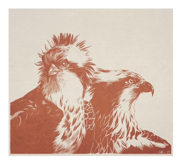 Ospreys (Pandion haliaetus) - Image 0