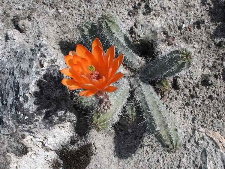 Desert's joy -