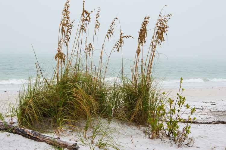 Beach Fog II -