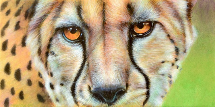 Cheetah Eyes - Image 0