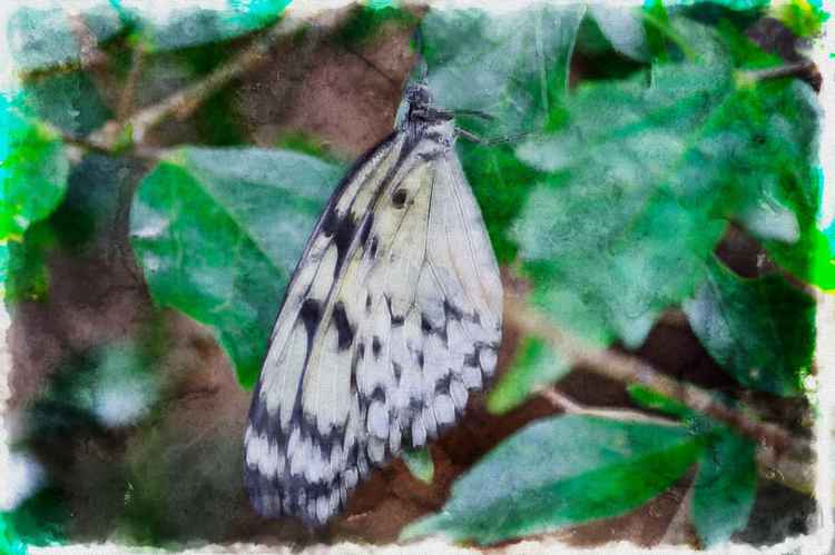 Butterfly 2 (Paper)