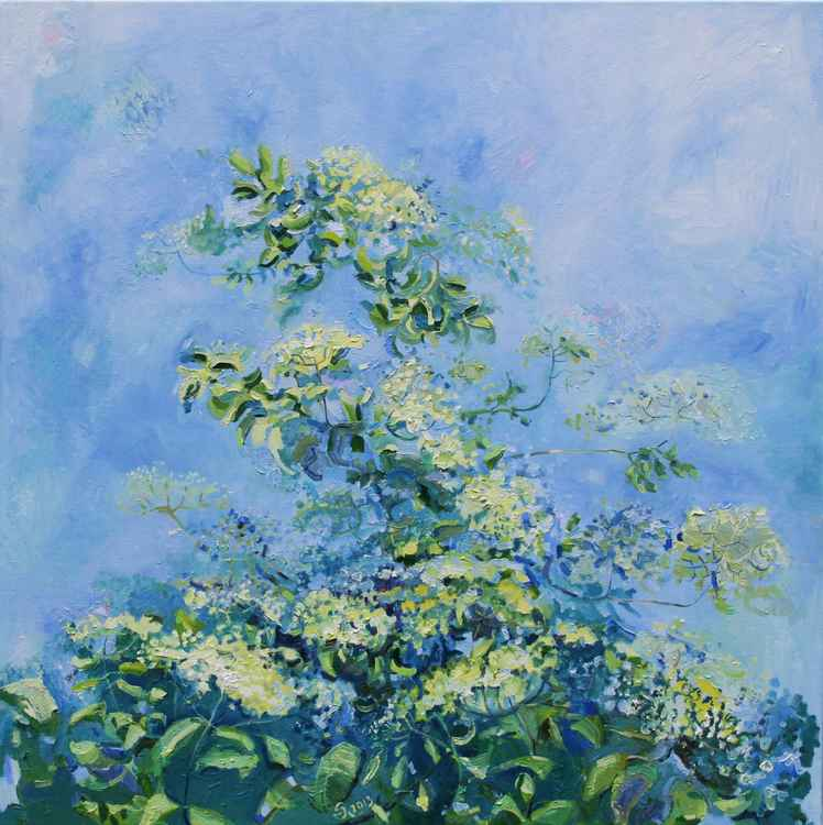 Blossom Elderberry Bush