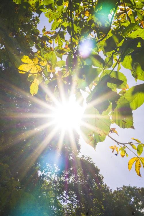"""October Sunshine  1/10  20"""" X 30"""" - Image 0"""