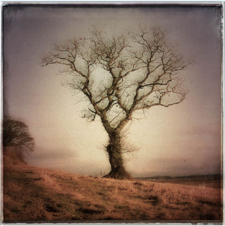 Lone Tree 3 - Image 0