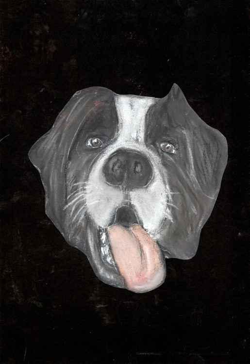 Saint Bernard dog -