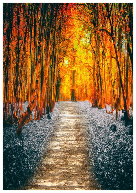 The Path - Image 0