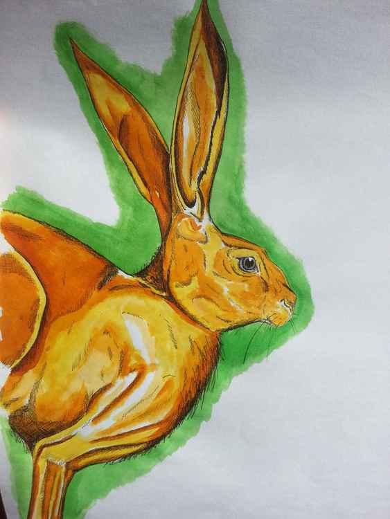Hare Study -