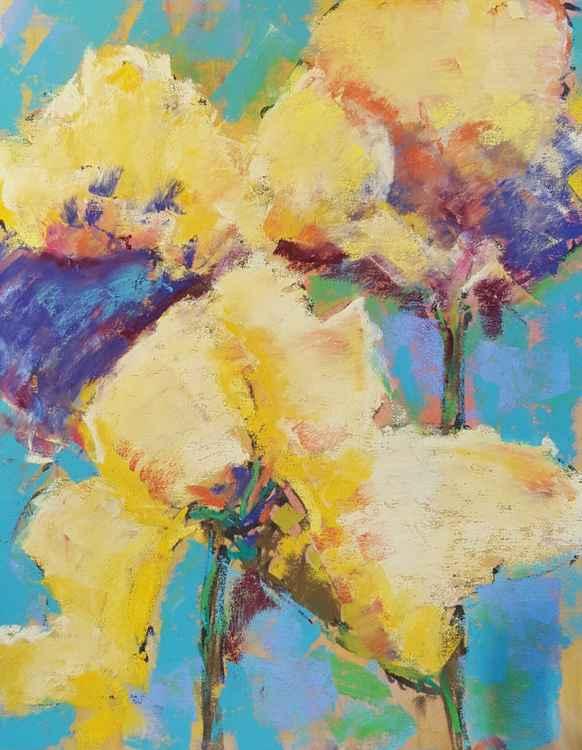 Three Iris Lassies (aka yellow iris flowers) -