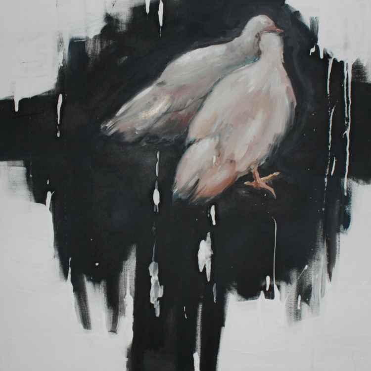 pigeons -