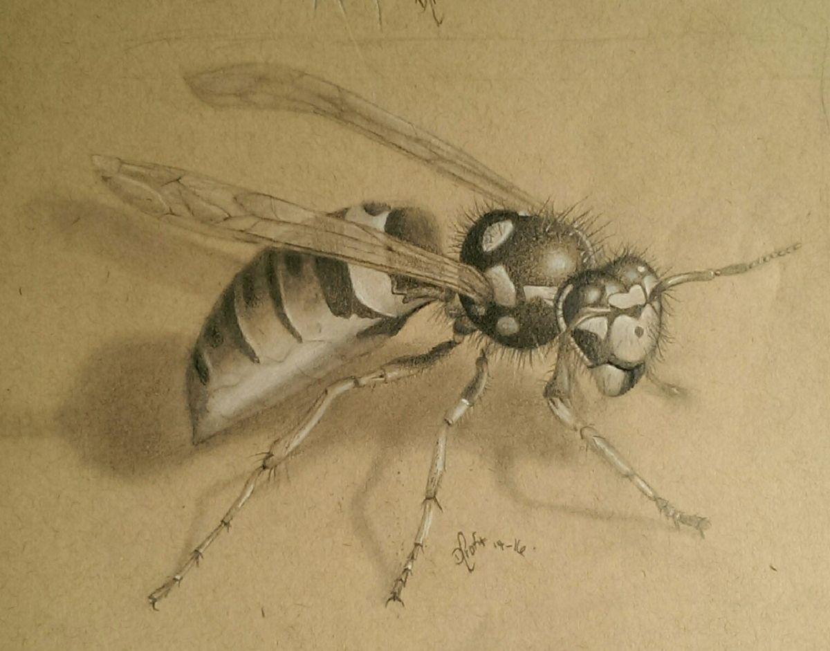 how to draw a realistic wasp