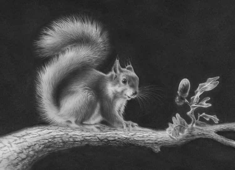 Red Squirrel (24x35cm)
