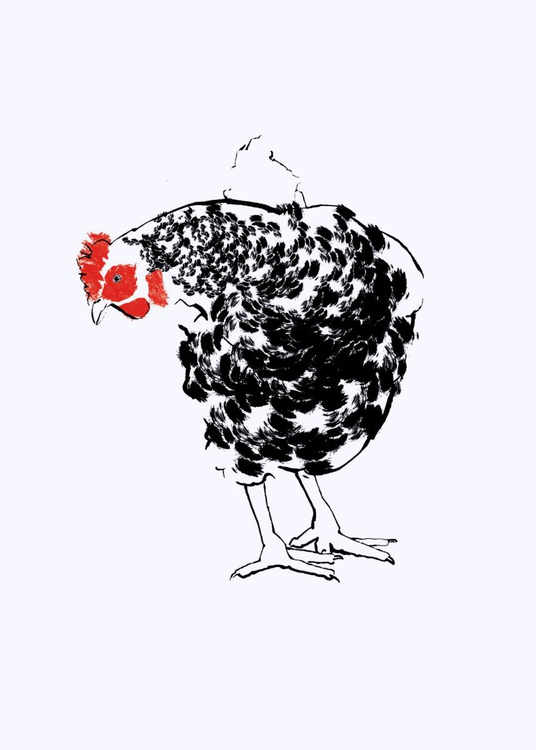 Black & White Chicken - Image 0