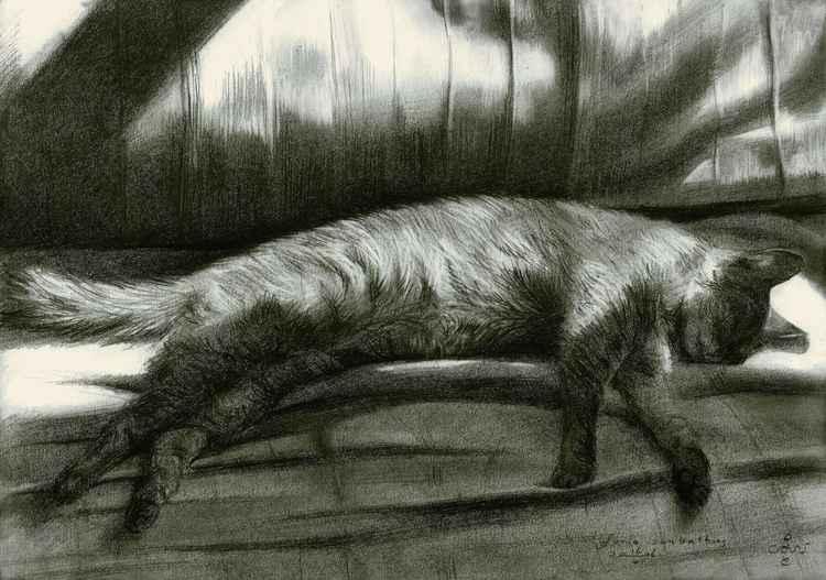 Furia sunbathing - 16-05-16 (sold) -