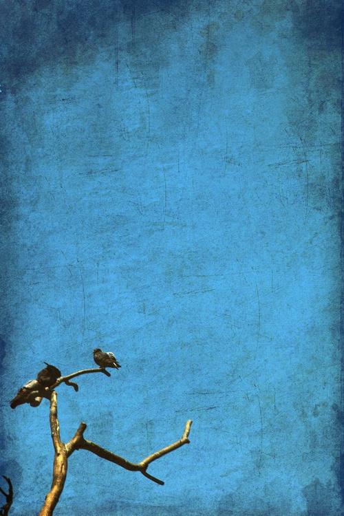 Paper Birds - Image 0