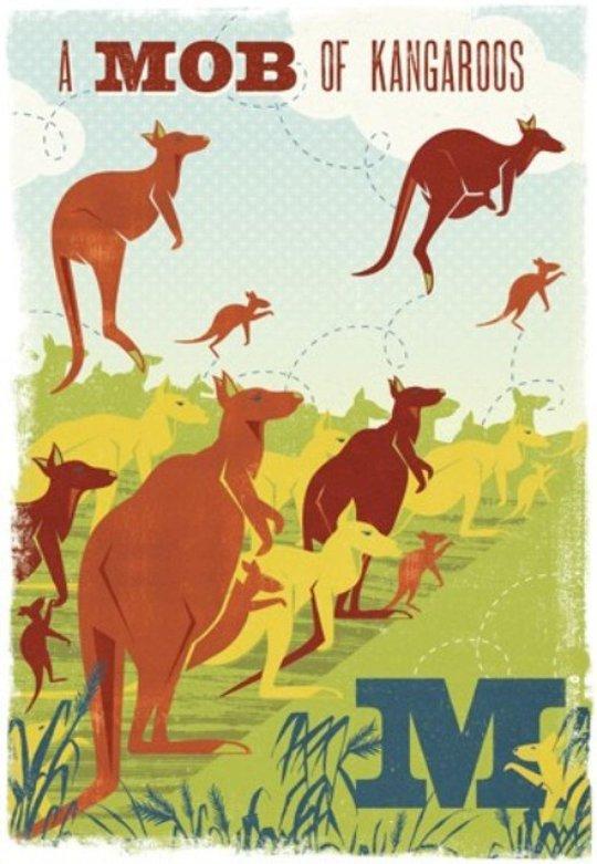 M - a Mob of Kangaroos