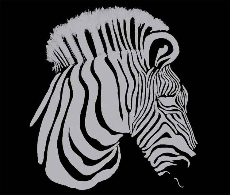 Zebra White and Black