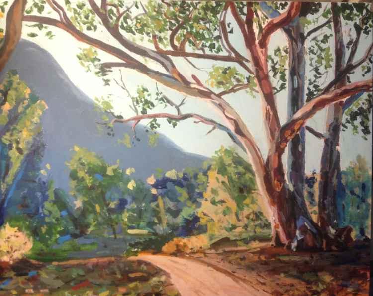 Eucalyptus -