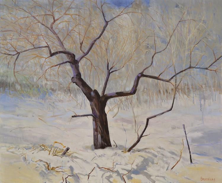 Apple tree in winter - Image 0