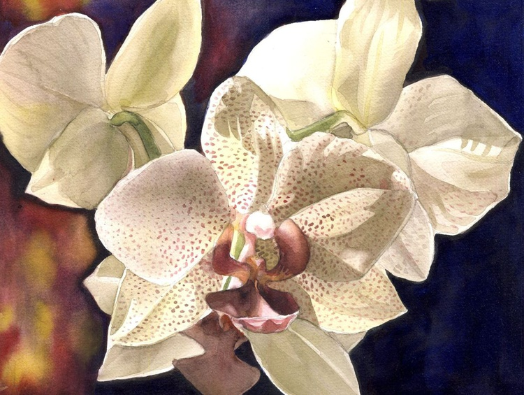 Orchid at night - Image 0