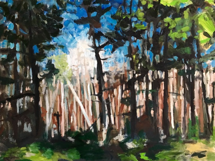 Pine Forest - Image 0
